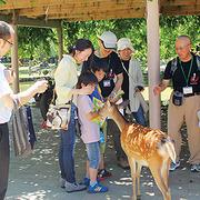 記者になって鹿の生態などを取材 夏休み親子新聞教室 in 奈良